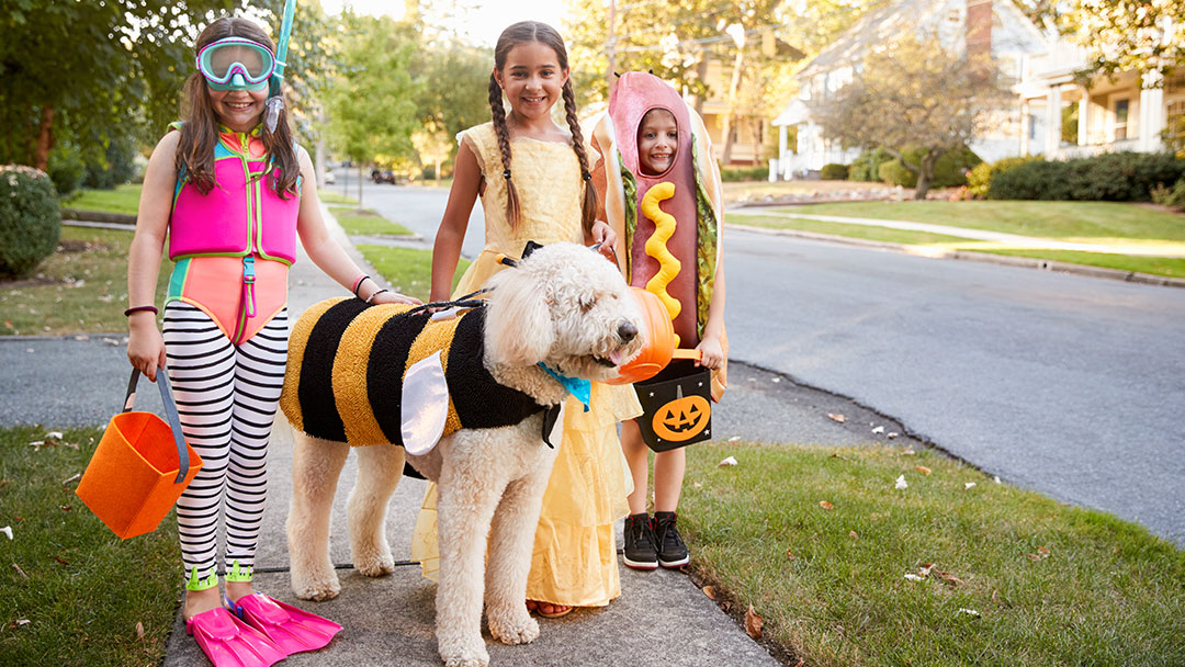 Simplify Your Halloween—Savor Every Spooky Moment!
